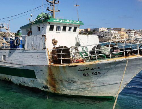 """Lampedusa, ecco il video verità della sparatoria sul peschereccio tunisino: """"Trovata droga a bordo"""". Altro che totani…"""